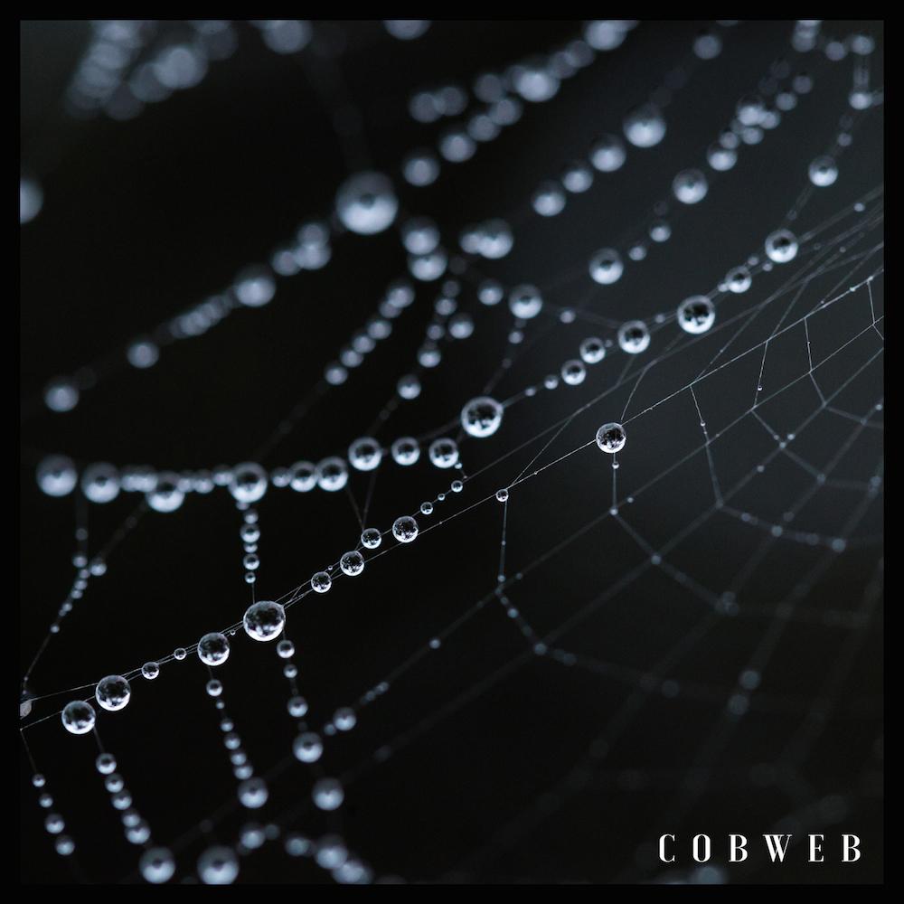 dead end cobweb